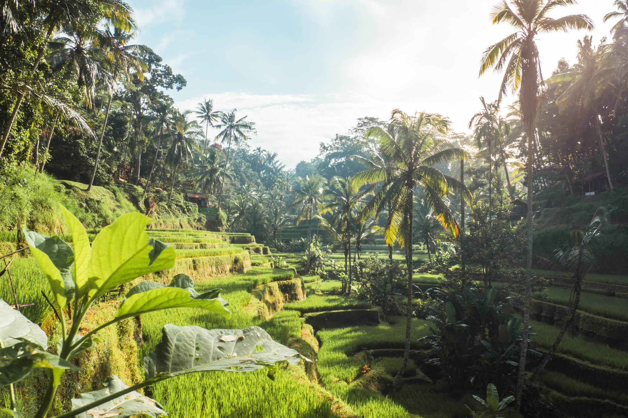Where to stay in Bali: A complete guide to the different areas on the island - Sunrise at Tegalalang Rice Terrace in Ubud