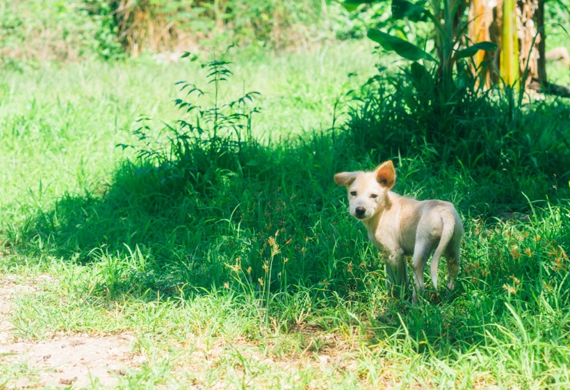 Dog Nusa Lembongan Indonesia