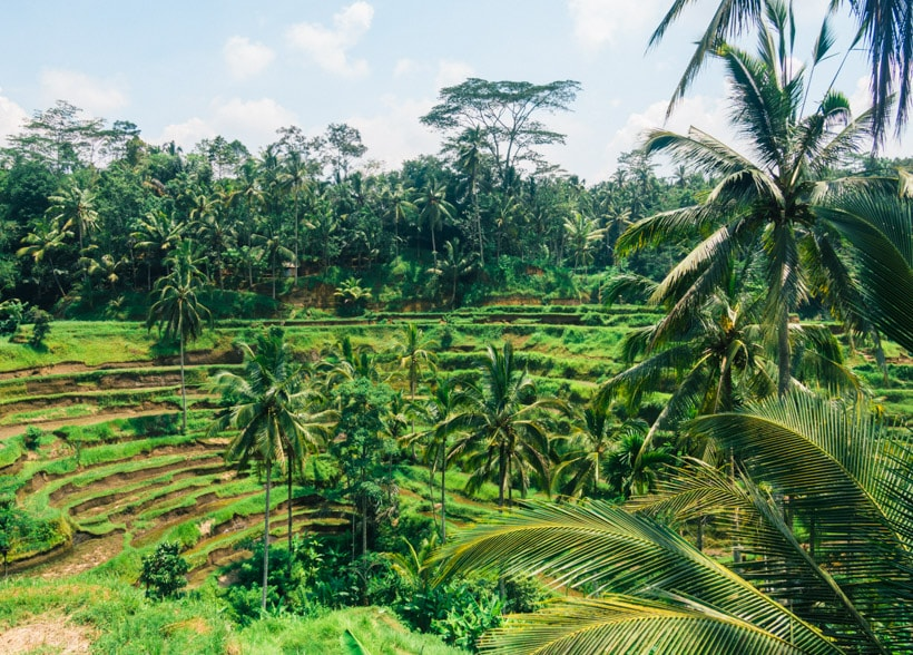 Tegalalang Rice Terraces Ubud, Bali - A first timer's guide to Ubud