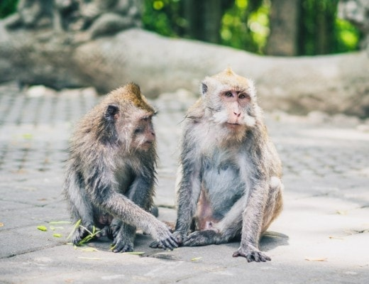 Sacred Monkey Forest, Ubud, Bali - A first timer's guide to Ubud