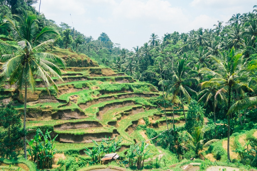tegalalang rice terrace in ubud visit or skip