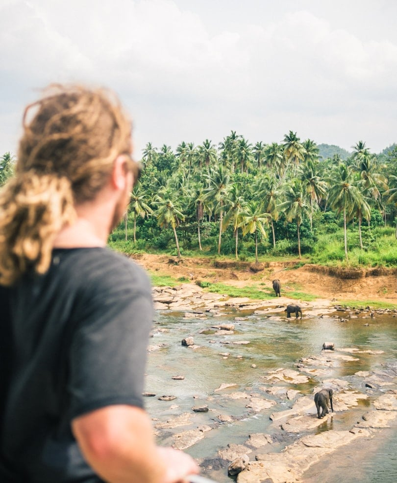 My experience with the elephants of Pinnawala, Sri Lanka - View from Hotel Elephant Park