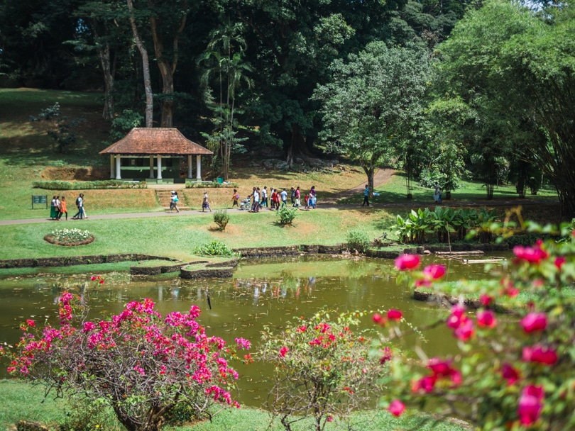 A quick guide to what to do in Kandy - Botanical Garden