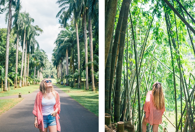 A quick guide to what to do in Kandy - Royal Botanical Gardens