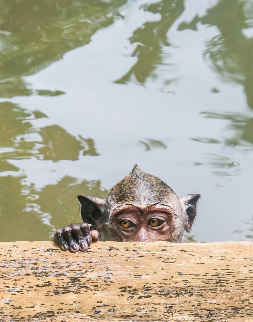Uluwatu Monkey Temple - Bali