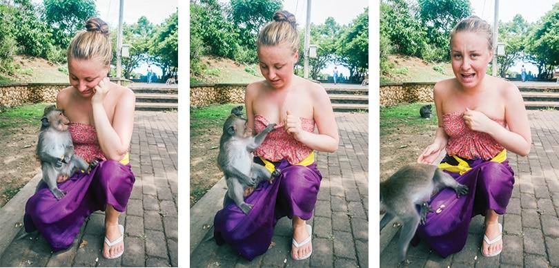 Ubud Monkey Forest Uluwatu Monkey Temple In Bali Sunshine Seeker