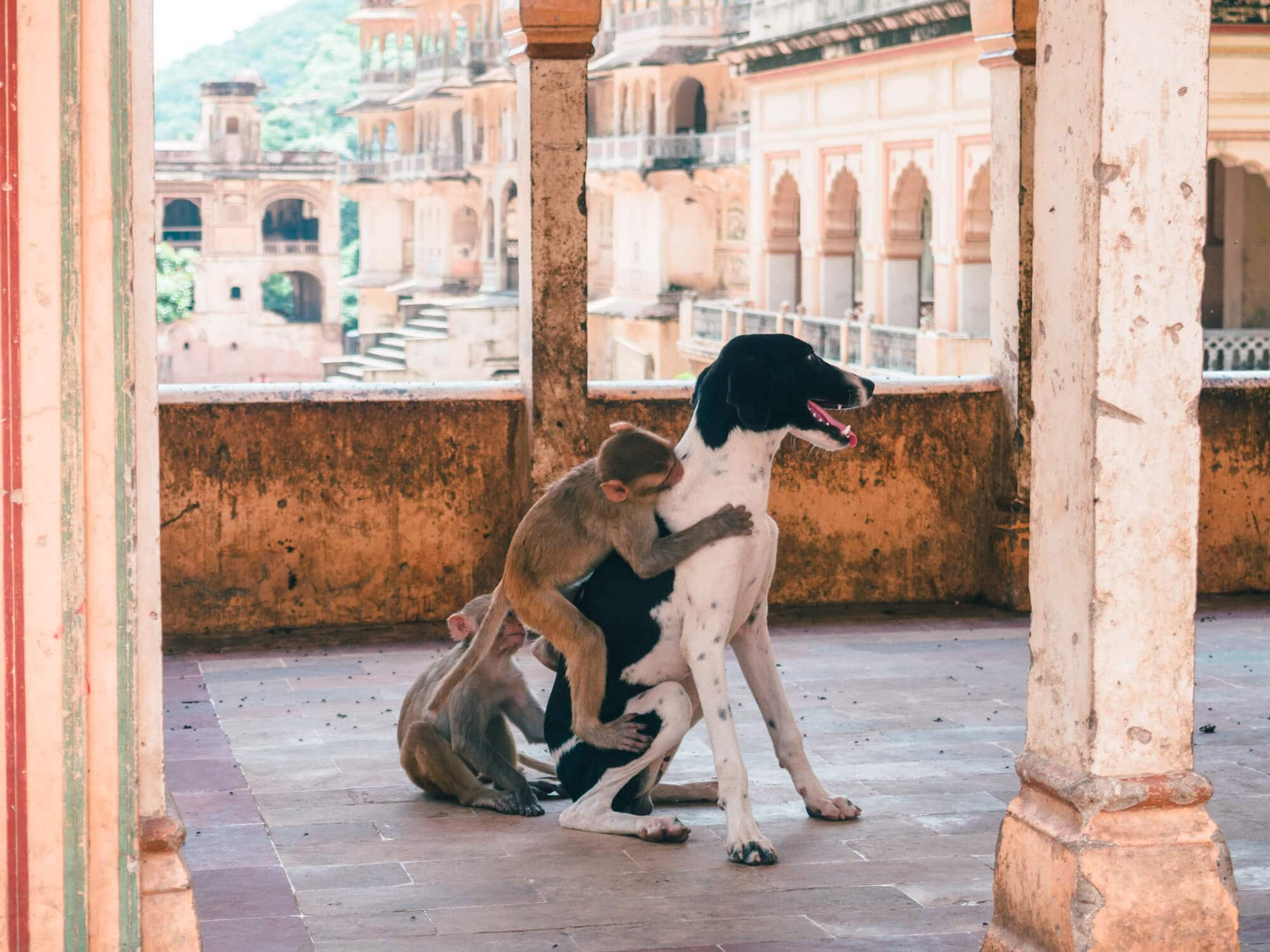 How to spend 2 days in Jaipur, India - Galtaji Monkey Temple