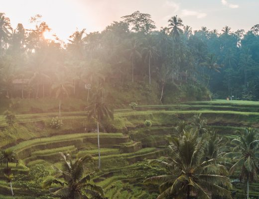 Island Life #3 - Early morning in Tegalalang Rice Terrace in Ubud