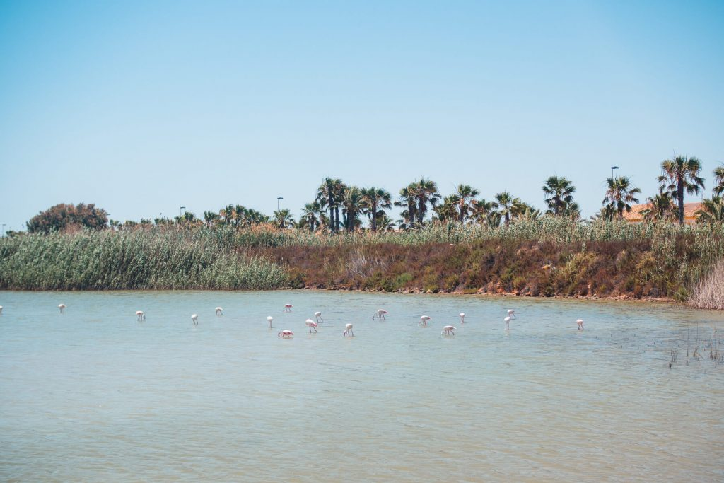 Murcia, Spain: Top 14 awesome things to do - Flamingos at Las Salinas Natural Reserve and marina