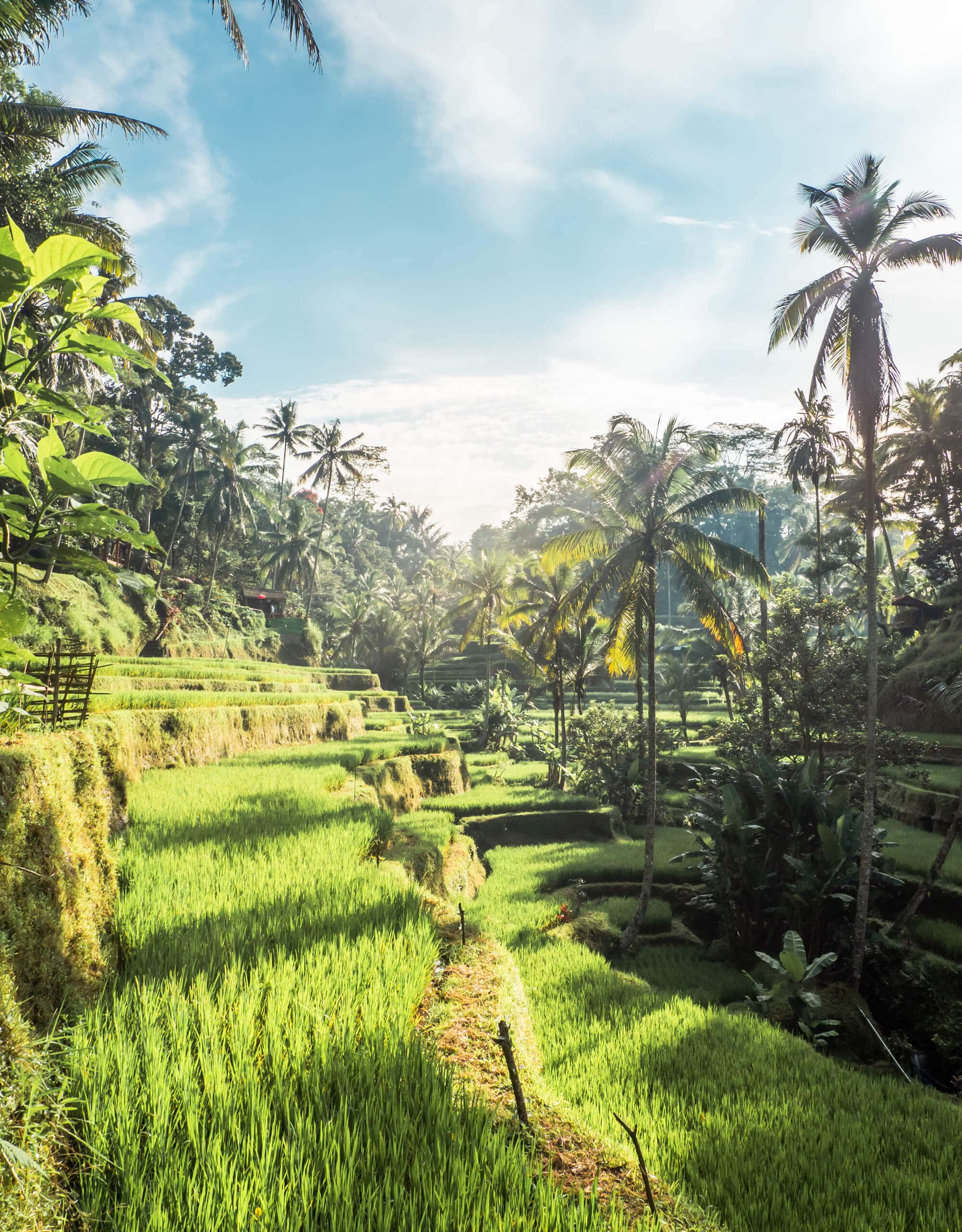 The Instafamous sunrise photo location in Tegalalang Rice Terrace, Ubud