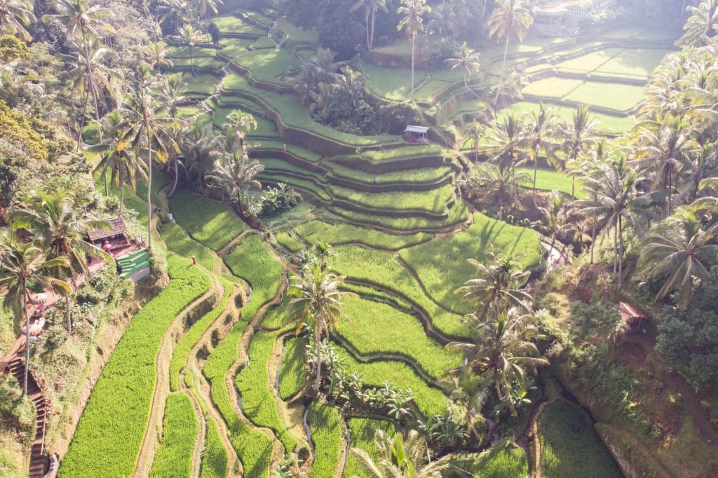 Drone view of the Instafamous sunrise photo location in Tegalalang Rice Terrace, Ubud