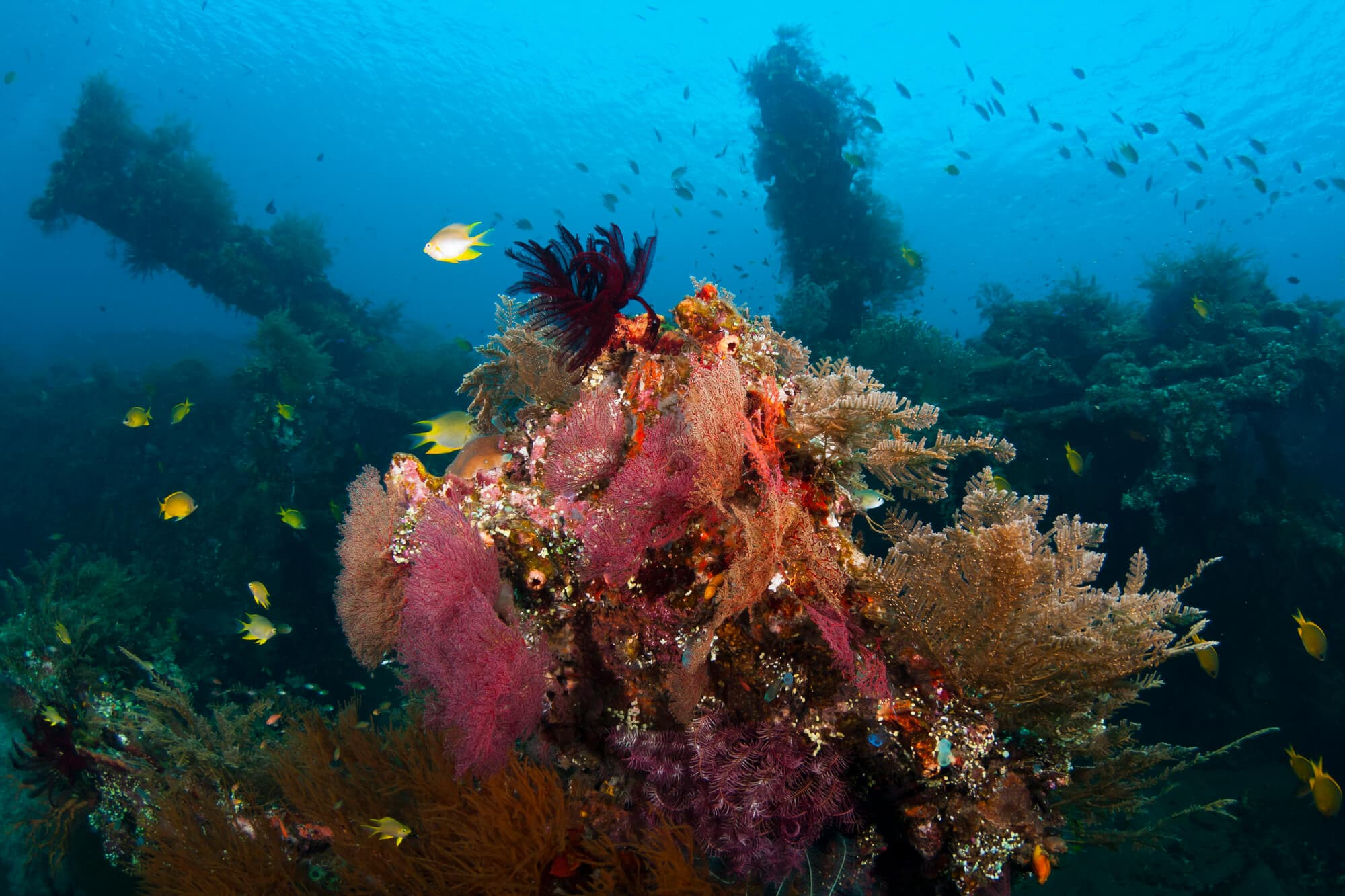 Go diving in Amed: One of the top things to do in East Bali