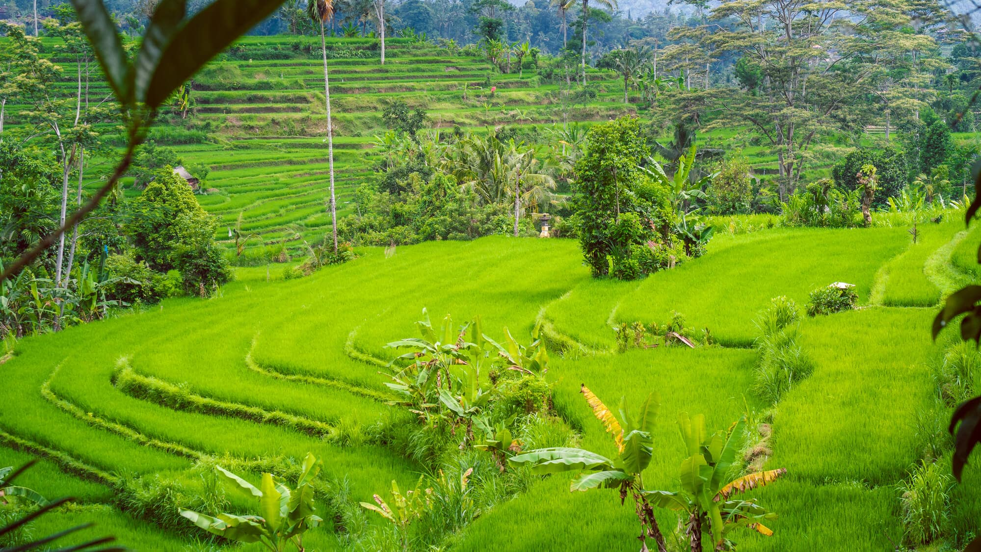 The beautiful valley of Sidemen - One of the places in East Bali you can't miss