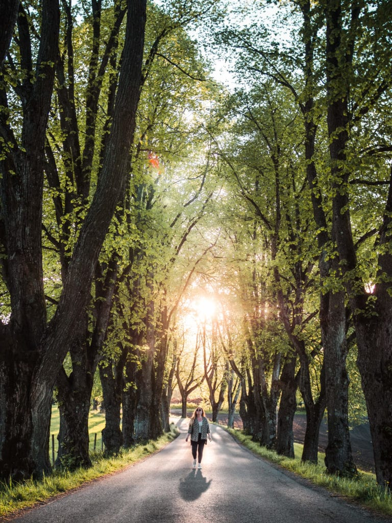 Best places to see and things to do in Norway - A beautiful alley of old oak trees in Skien #bucketlist #travelinspo #norway #telemark #skien