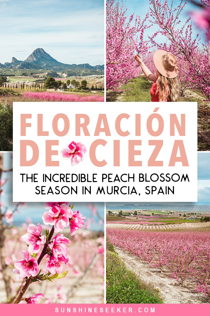 Discover the incredible Floración de Cieza (fruit tree blooming) in Murcia, Spain. Where to see the peach tree blossoms, how to get to Cieza + best things to do close by. Awesome things to do in the Region of Murcia, Spain