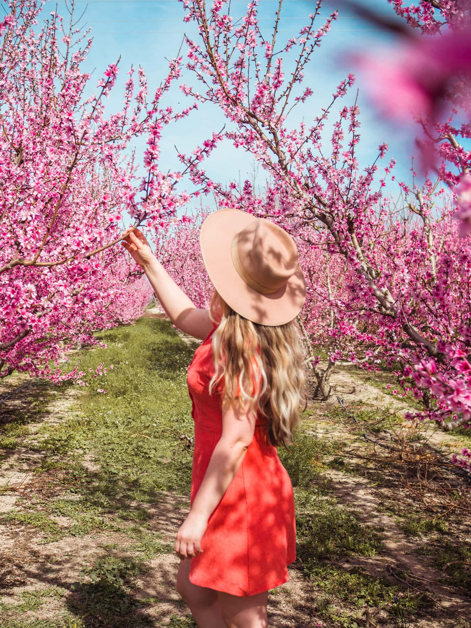 Smelling the sweet peach tree blossoms at Floración de Cieza in Murcia, Spain